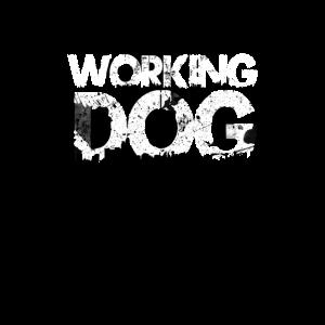 WORKING DOG SPLASH