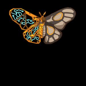 Motte Schmetterling Libelle Libelle Insekt
