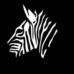 zebre tete profil 17 2