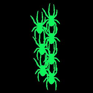 Spinne Spinnen Tiere