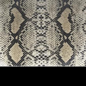 Schlangen Print