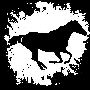 pferde pferd