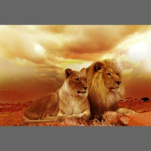 Löwen Lions
