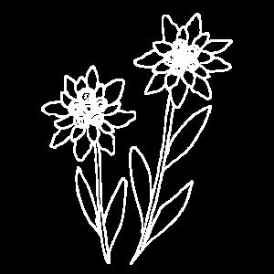 Edelweiß handgezeichnete Blume