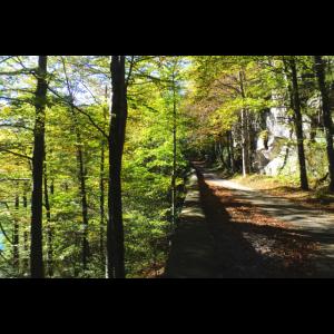 Waldweg bei Sonnenschein