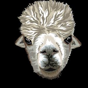 alpaka face pako peru alpaca