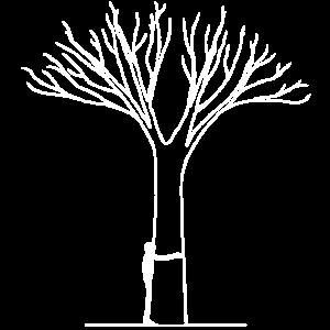 Baum Umarmung