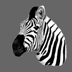 Cooles Zebra