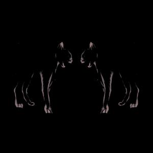 Schwarze Katzen Spiegelbild