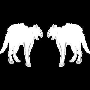 Weiße Katzen Spiegelbild