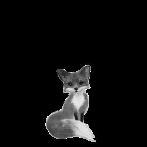 Fuchs mit Pusteblume