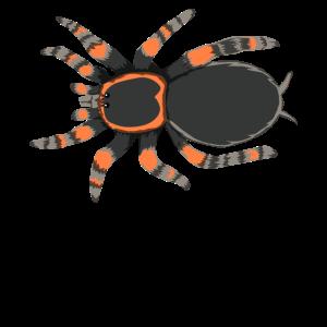 Tarantel Spinne Arachnid Insekt Natur Geschenk