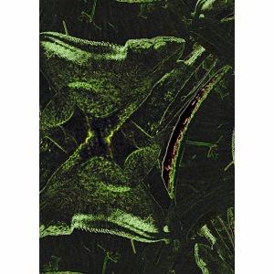 Cameleon fractal