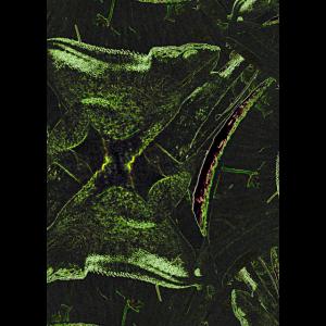 Kameleon-Fraktal
