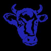 Kuh Kuhkopf Landwirt Kühe Rind Rinderzucht