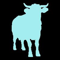 Kuhle Kuh Rind Rinder Milchbauer Rinderzucht