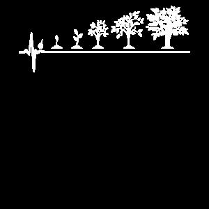 Pflanzen Evolution