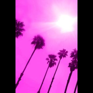 L.A. Palm magenta
