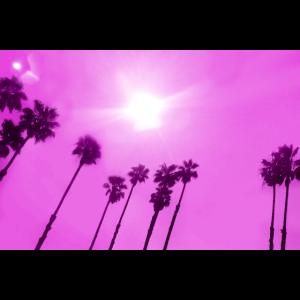 L.A. Palms magenta quer