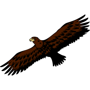 Adler vogel fliegen anmut raubvogel