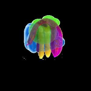 Colorcontest Veggies1
