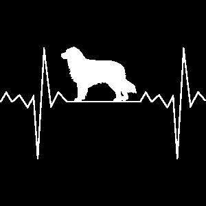 Herzschlag Herzfrequenz Australian Shepherd