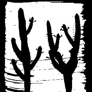 Kaktus Kakteen Sonnenuntergang Retro