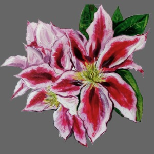 Clematis painting