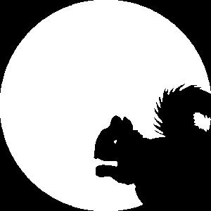 Eichhoernchenn squirell