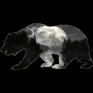 Bär Grizzlybären Teddybär Wald Mondschein