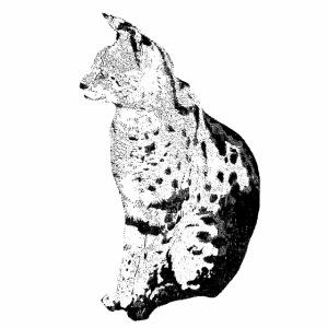 Serval Logo