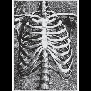 Skelett, Brustkorb, Illustration I Geschenkidee