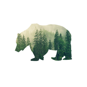 Camping - It's All Good In The Woods - Bear, Wood