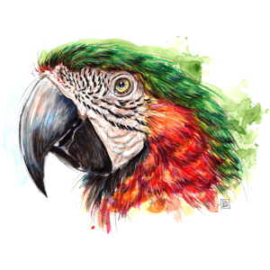SM Papagei | macaw