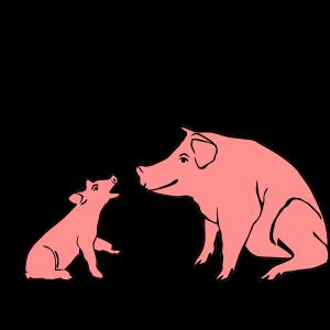 BBQ Schweine