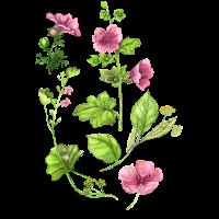 Botanisch, Blume, Blumen, Blumenmotiv, Botanik