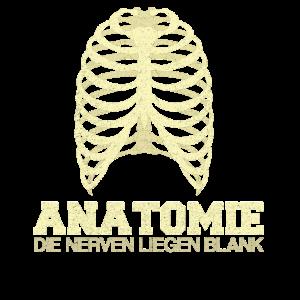Anatomie Medizinstudent Skelett Medizin