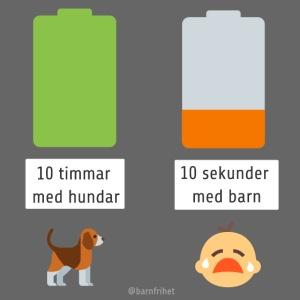 Livsbatteriet HUND
