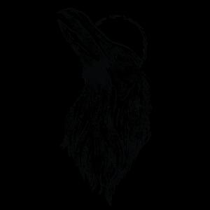Rabe - Zeichnung, Symbol, Mystik