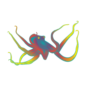 Oktopus bunt