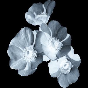 Blume hell blau