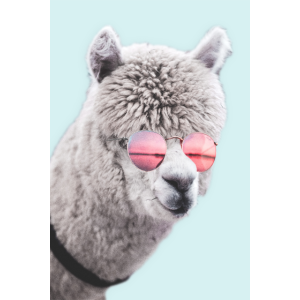 Alpaca Dude