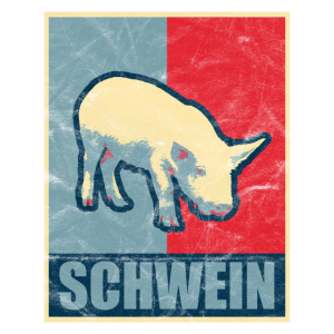 Schwein Haussschwein
