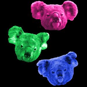 Koala Bunt Farbig