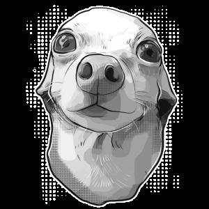 Chihuahua witziger Hund