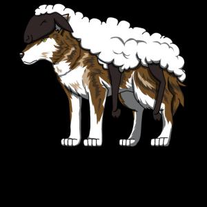 Schafe Wolf Schäfer Schafzucht Zucht Züchter Hirte
