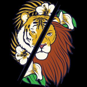 Tiger Lion Löwe Jungle Könige Tropische Raubtiere