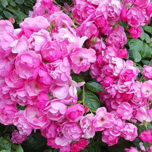 02 Blumen Fantasie Rosen Poster Gesichtsmaske
