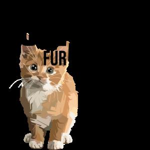 Ein Katzenliebhaber wird 50! 50. Geburtstag