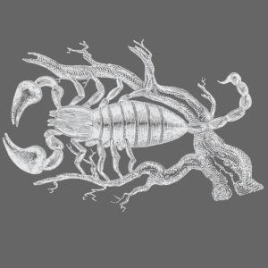 Weisser Skorpion